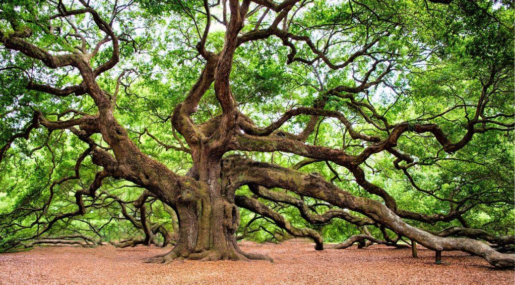 Baum Mystik
